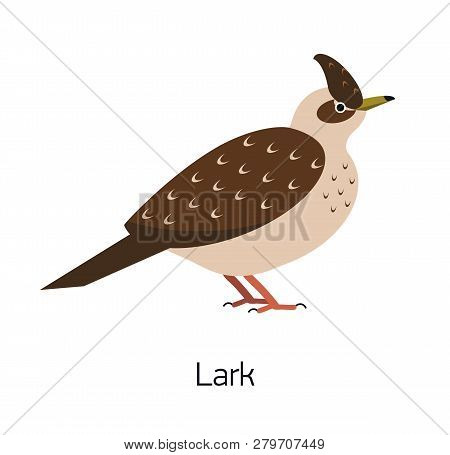 Lark isolated on white background. Beautiful forest passerine bird, adorable woodland songbird. Funny birdie. Avian species. Modern colorful vector illustration in trendy flat geometric style. poster