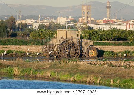 Dirty Mud Tractor In A Rice Field And White Herons Around It In The Natrual Park Of Albufera, Valenc
