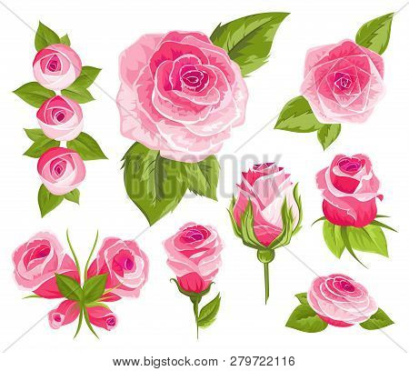 Vintage Flowers Set. Pink Roses And Buds. Wedding Flowers Bundle. Flower Collection Of Watercolor De