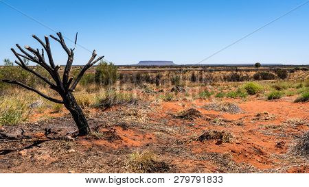 Mount Conner Or Attila Mountain Scenic View With Dead Burnt Tree In Nt Central Outback Australia