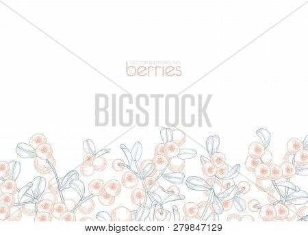 Elegant Banner Template Decorated With Lingonberries Hand Drawn With Contour Lines On White Backgrou