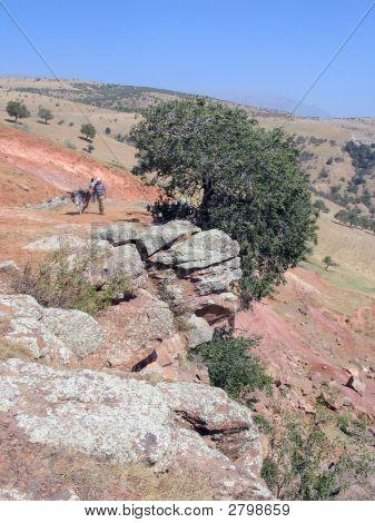 Baum über steile