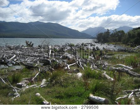Dead Wood On Lake
