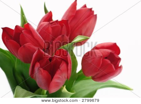 Bouquet Of Red Tulyps