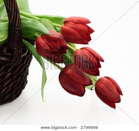 Wicker Basket With Red Tulips