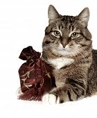 cat with bag poster