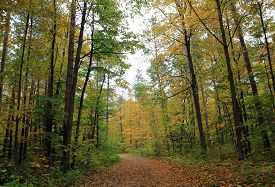 The Trail In The Colorful Autumn Forest