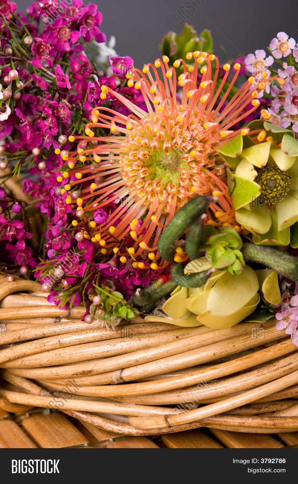Australian Native Image Photo Free Trial Bigstock
