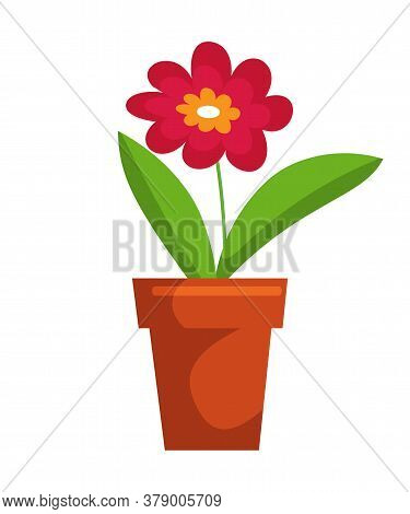Blossom Flower Bud In Pot Isolated On White Background. Beautiful Plant For Design Interior. Ceramic