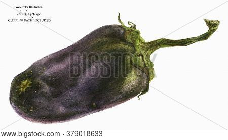 Black Eggplant, Botanical Realistic Watrecolor Art, Clipping Path Included