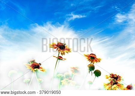 Beautiful Flower And Blue Sky, Honey Bee Collecting Pollen