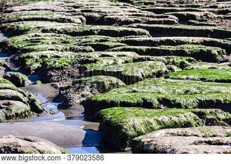 Rocky Shoreline In Pebble Beach California