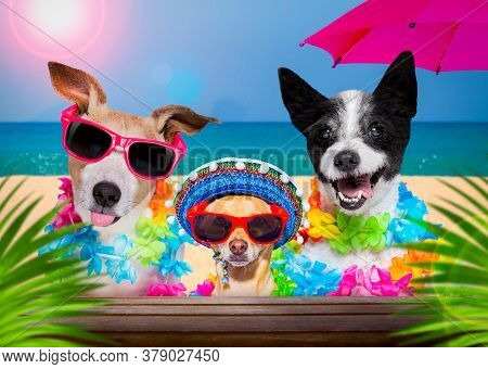 Dog Family   With Husband Wearing Sunglasses In Summer Vacation Holidays   With  Cocktail Drink Or B