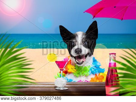 Lady Diva Poodle In  Summer Vacation Holidays   With  Cocktail Drink Or Beverage   At The Beach Bar