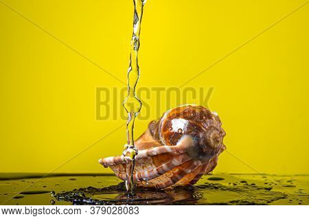 Water Pours Onto A Seashell Against A Yellow Background. Marine Inhabitant. Creative Photo Of A Seas