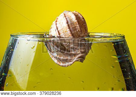 Seashell Falls Into The Water On A Yellow Background. Creative Photo Of A Seashell.