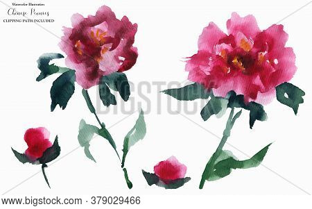 Chinese Peony Pink Flowers, Abstract Watercolor Art, Clipping Path Included
