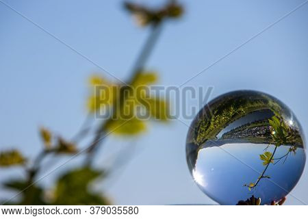 Crystal Ball Shows Valley Of River Moselle And Defocused Grapevine In Background