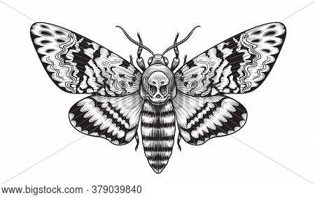 Hand Drawn Acherontia Styx Butterfly Isolated On Blank Background. Vector Monochrome Death's-head Ha