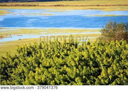 Lush Green Trees Overlooking A River On An Estuary Taken At Newport Back Bay In Newport Beach, Ca