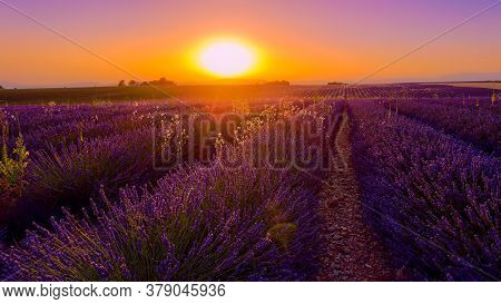 Amazing Sunset Over The Lavender Fields Of Valensole Provence In France - Travel Photography