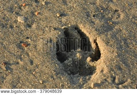 Impression Of A Dog Paw In Sand On The Beach.