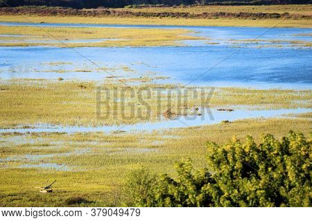 Tallgrasses Surrounding An Estuary Taken On Wetlands At The Newport Back Bay In Newport Beach, Ca