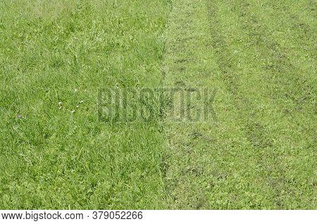 Green Lawn Grass Lawnmowing Mowing Garden Background