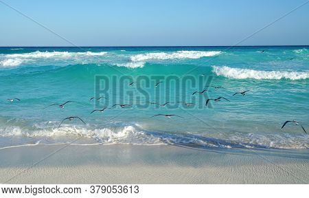 Landscape Of Sea Waves And Seagulls At Beach In Caribbean Sea