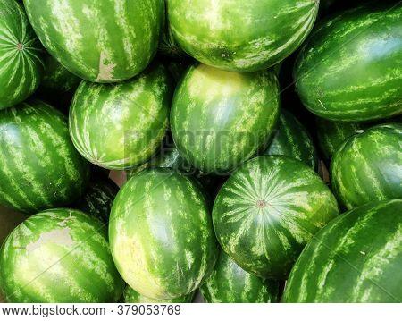 Pile Of Fresh Watermelon In The Harvest Season