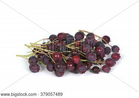 Berries Of Amelanchier, Shadbush, Shadwood, Shadblow, Serviceberry, Sarvisberry,   Juneberry, Saskat