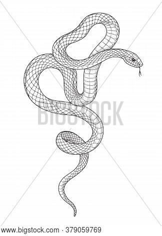 Hand Drawn Twisted Snake Isolated On Blank Background. Vector Monochrome Serpent Side View. Black An