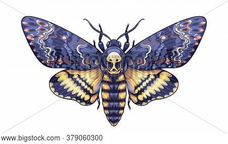 Hand Drawn Acherontia Styx Butterfly Isolated On White Background. Vector Death's-head Hawk Moth Top