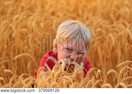 Cute Fair Haired Boy Sitting Between Ears Of Ripe Wheat. Healthy Lifestyle.