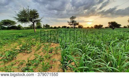 Cloudy Sky In Monsoon In Fields Of India
