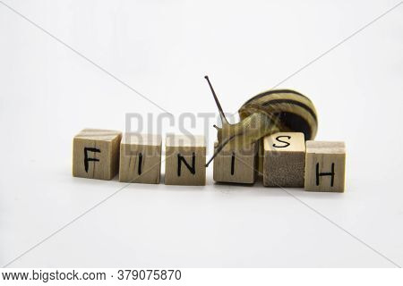 Striped Land Snail With Small Wooden Cubes With Letters Isolated On The White Background. A Word Fin