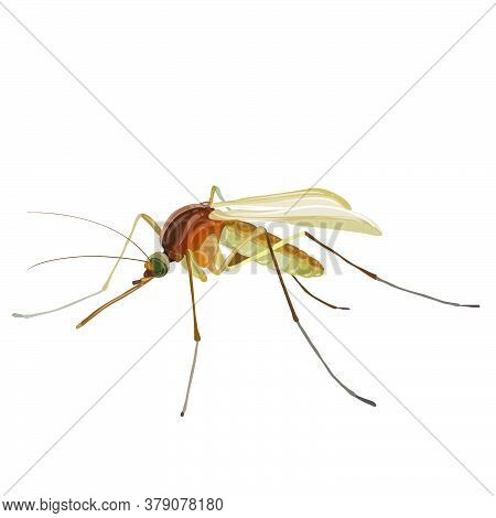 Insect Mosquito, Isolated Object On White Background, Vector Illustration, Eps