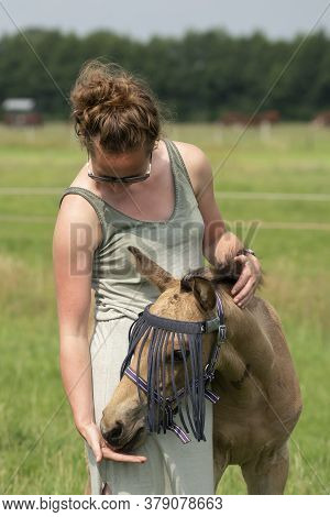 A Falk Color Foal In The Field, Wearing A Fly Mask, Young Woman Takes Off The Fly Mask
