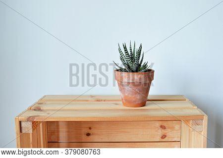 Haworthia House Plant In Terracotta Pot On Wooden Box Over White