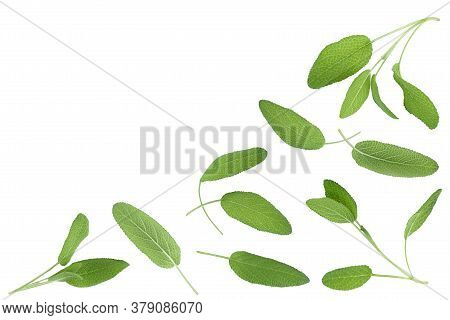 Sage Herb Leaves Isolated On White Background With Clipping Path . Top View With Copy Space For Your