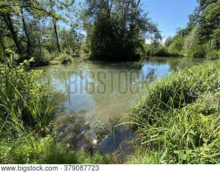 A Summer Landscape With Trees Along Small Lakes Or Ponds Along The Glatt River - Zürich (zuerich Or