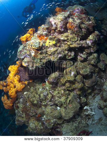 St Lucia Coral Formation