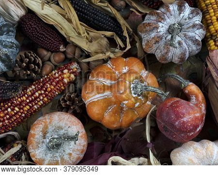 Seasonal Autumn Decorations Consisting Of Pumpkins, Gourds, And Corn For Thanksgiving Or Halloween H