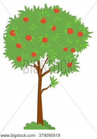 Tree With Ripe Apple, Harvesting Fruit, Picking Apple. Sweet Product, Orchard Element, Countryside P