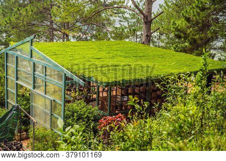 Gazebo With A Perfect Turf Roof In The Summer In A Pine Forest