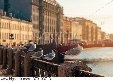 Seagulls Are Sitting On The Fence Of The City Canal. European Cityscape. Seagulls In The City