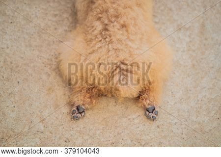 The Dog Lies With Outstretched Hind Legs. Hot Dog. Animal Rights
