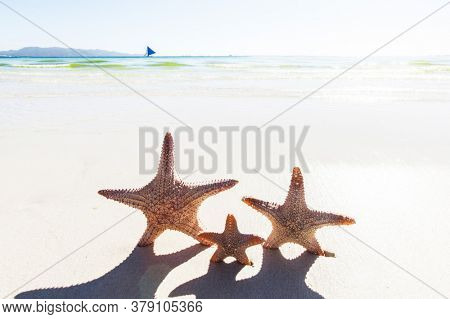 Close up shot of three starfish on sandy beach, family vacation concept