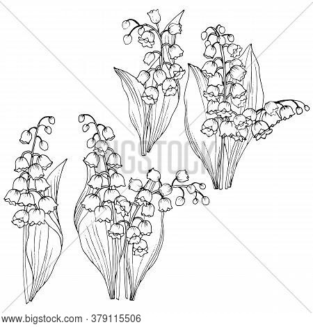 Set Of Elements In Black And White, Leaves And Flowers Of The Lily Of The Valley, Vector Illustratio