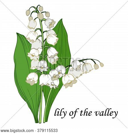 Vector Illustration, Isolate On A White Background, Bouquet Of Lily Of The Valley In Color, Lilies O